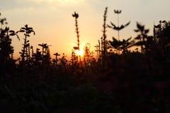 Fiore astratto sul tramonto, fondo di luce solare Immagini Stock