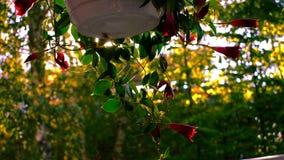 Fiore in autunno Fotografie Stock