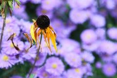 Fiore in autunno Fotografia Stock Libera da Diritti