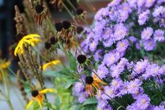 Fiore in autunno Fotografie Stock Libere da Diritti