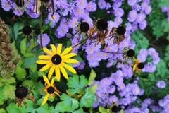 Fiore in autunno Immagini Stock Libere da Diritti