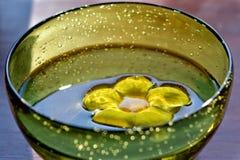 Fiore bagnato in sole Fotografie Stock Libere da Diritti