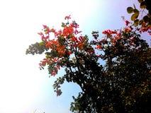 Fiore bastardo fotografie stock libere da diritti
