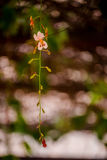 Fiore bello Immagine Stock Libera da Diritti