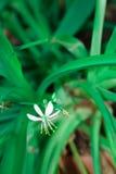 Fiore bello Fotografia Stock