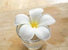 Fiore bianco Immagine Stock Libera da Diritti