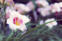 Fiore bianco Immagini Stock