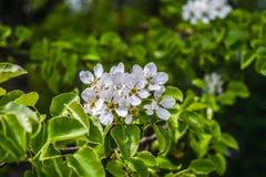 Fiore bianco Immagine Stock