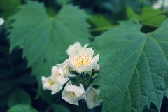 Fiore bianco arancio e di giallo Fotografie Stock