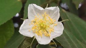 Fiore bianco con la porta gialla Fotografia Stock Libera da Diritti