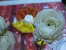 Fiore bianco d'apertura alla tavola di cena Immagini Stock Libere da Diritti