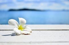 Fiore bianco dal mare blu Fotografia Stock