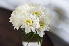 Fiore bianco del crisantemo in vetro Fotografie Stock