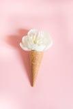 Fiore bianco della peonia nel cono della cialda su fondo rosa Concetto di estate Fotografie Stock Libere da Diritti