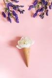 Fiore bianco della peonia nel cono della cialda su fondo rosa e sull'aconitum porpora Concetto di estate immagini stock