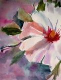 Fiore bianco della sorgente royalty illustrazione gratis