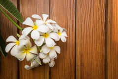 Fiore bianco di plumeria su fondo di legno Immagini Stock Libere da Diritti