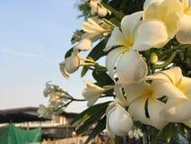 Fiore bianco e chiaro cielo immagini stock