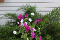 Fiore bianco e di porpora in cespuglio fotografie stock