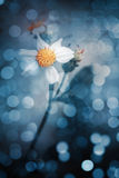 Fiore bianco e luce del bokeh r Fotografie Stock