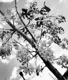 Fiore in bianco e nero fotografia stock libera da diritti