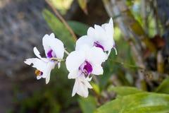 Fiore bianco e porpora dell'orchidea ed insetti gialli sul fondo della natura fotografie stock