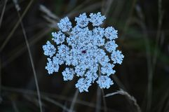 Fiore bianco fantastico nei prati di Rebedul a Lugo Natura dei paesaggi dei fiori fotografie stock