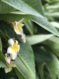 Fiore bianco giallo immagine stock libera da diritti