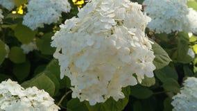 Fiore bianco in giardino Immagini Stock