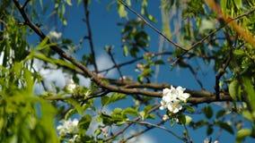 Fiore bianco nelle foglie in lugu-lago immagine stock libera da diritti