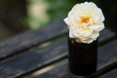 Fiore bianco in piccola bottiglia per voi fotografia stock libera da diritti