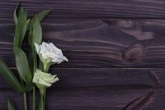 Fiore bianco su un fondo di legno scuro Giorno del biglietto di S Cartolina d'auguri Immagini Stock