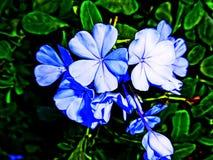 Fiore blu adorabile fotografia stock