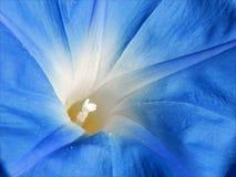 Fiore blu con il centro bianco Fotografia Stock Libera da Diritti