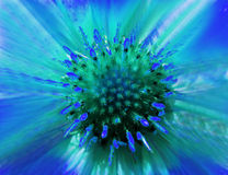 Fiore blu-verde su un fondo vago closeup Centro verde simile a pelliccia Pistilli che attaccano fuori come gli aghi Per il disegn Fotografia Stock Libera da Diritti