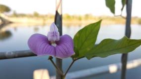Fiore bluastro fotografie stock