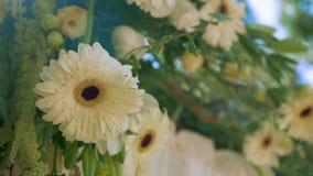 Fiore Bokeh tenuto in mano di nozze video d archivio