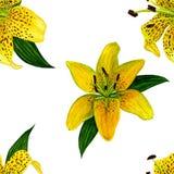 Fiore botanico del fiore Reticolo senza giunte Gigli acquerelli gialli Perfezioni per gli ambiti di provenienza, le strutture, la fotografie stock libere da diritti