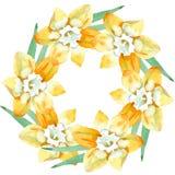 Fiore botanico floreale del narciso giallo Insieme dell'illustrazione del fondo dell'acquerello Quadrato dell'ornamento del confi illustrazione di stock