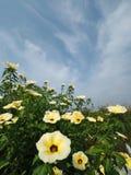 Fiore brillante Fotografia Stock Libera da Diritti