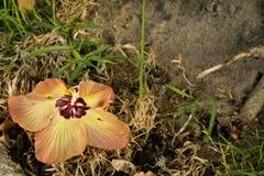 Fiore caduto Immagine Stock