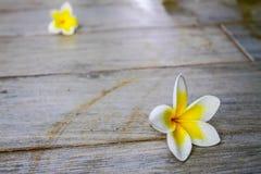 Fiore caduto sul pavimento Fotografie Stock Libere da Diritti