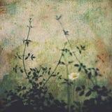 Fiore in calcestruzzo ed in ombre Fotografia Stock