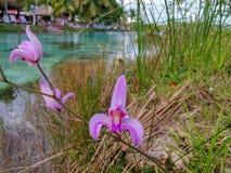 Fiore caribean esotico immagini stock libere da diritti