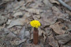 Fiore in cartuccia-caso immagine stock libera da diritti