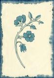 Fiore che attinge fondo macchiato Immagine Stock