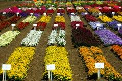 Fiore che coltiva nella California Immagini Stock Libere da Diritti