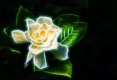 Fiore chiaro Fotografie Stock