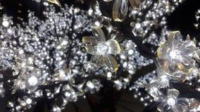 Fiore chiaro Immagini Stock
