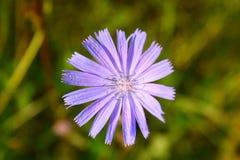 Fiore circolare fotografia stock